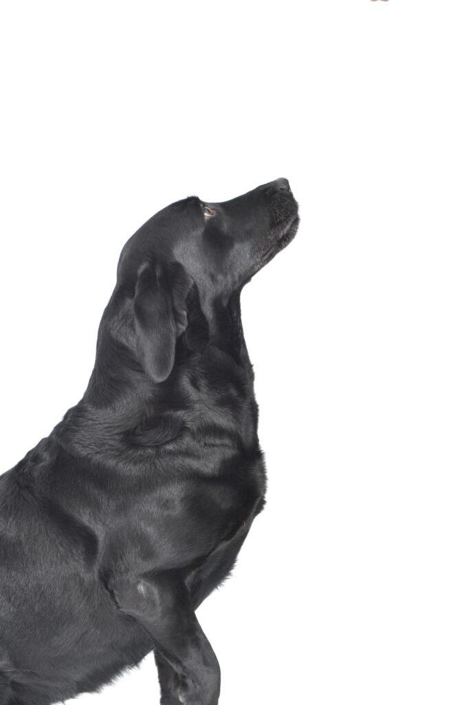 がん探知犬によるがん検査『ドッグ・ラボ』